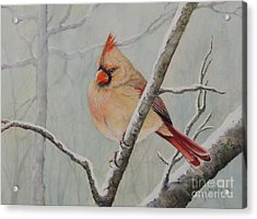 Puffed Up For Winters Wind Acrylic Print