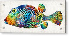 Puffer Fish Art - Puff Love - By Sharon Cummings Acrylic Print by Sharon Cummings