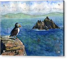 Puffin At Skellig Island Ireland Acrylic Print by John D Benson