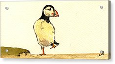 Puffin Bird Acrylic Print