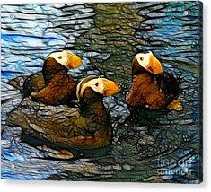 Puffin Clutch Acrylic Print