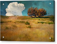Puffy Cloud Acrylic Print by Carolyn Dalessandro