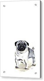 Pug 1 Acrylic Print by Barbara Marcus