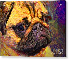 Pug 20130126v1 Acrylic Print by Wingsdomain Art and Photography