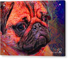 Pug 20130126v2 Acrylic Print by Wingsdomain Art and Photography