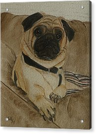 Pug Dog All Ready To Cuddle Acrylic Print by Kelly Mills