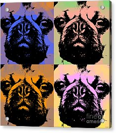 Pug Pop Art Acrylic Print