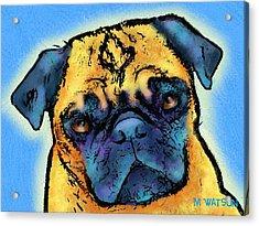 Pug Acrylic Print by Marlene Watson