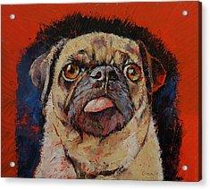 Pug Portrait Acrylic Print by Michael Creese