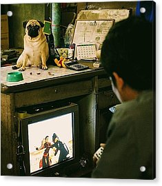 Pug On The Table, Sci-fi On The Tv Acrylic Print