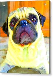 Pug Painting Acrylic Print by Iain McDonald