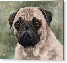 Pug Portrait Painting Acrylic Print by Rachel Stribbling