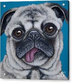 Pug Portrait Acrylic Print