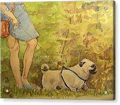 Pug Walkign Acrylic Print