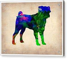 Pug Watercolor  Acrylic Print by Naxart Studio
