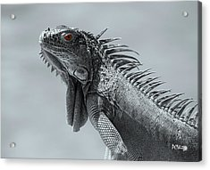Acrylic Print featuring the photograph Pugnacious by Patrick Witz