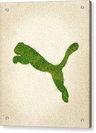 Puma Grass Logo Acrylic Print by Aged Pixel