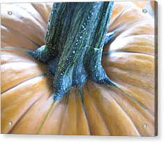 Acrylic Print featuring the photograph Pumpkin by Beth Vincent