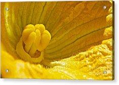 Pumpkin Blossom Acrylic Print by Linda Bianic