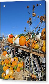 Pumpkin Farm Acrylic Print by Minnie Lippiatt