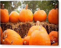 Pumpkin Fest Acrylic Print by Sonja Quintero