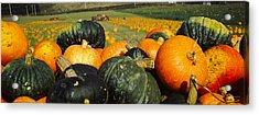 Pumpkin Field, Half Moon Bay Acrylic Print