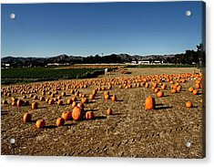 Acrylic Print featuring the photograph Pumpkin Field by Michael Gordon
