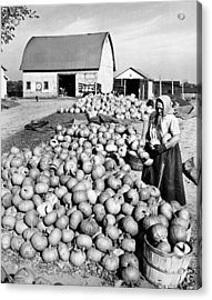 Pumpkin Harvest Acrylic Print by Underwood Archives