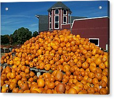Pumpkin Heaven Acrylic Print by David Schneider