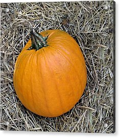 Pumpkin In The Hay Acrylic Print