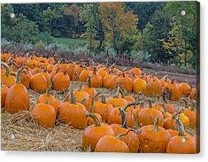 Pumpkin Parade Acrylic Print