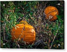 Pumpkin Patch Acrylic Print by Gene Sherrill