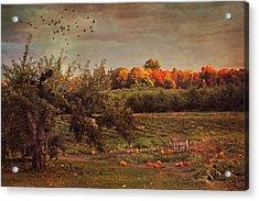 Pumpkin Patch In Autumn Acrylic Print by Joann Vitali