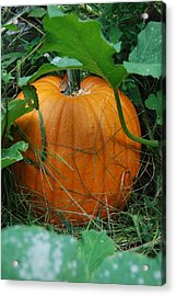 Acrylic Print featuring the photograph Pumpkin Patch by Ramona Whiteaker