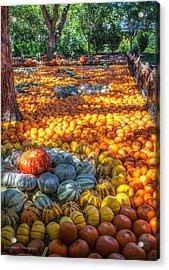 Pumpkin Patch Acrylic Print by Ross Henton