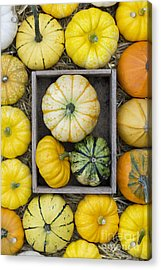 Pumpkin Pattern Acrylic Print by Tim Gainey