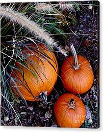 Pumpkin Portrait Acrylic Print