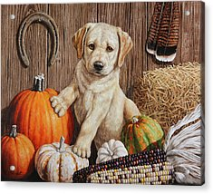 Pumpkin Puppy Acrylic Print by Crista Forest
