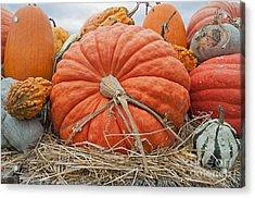 Pumpkin Times Acrylic Print