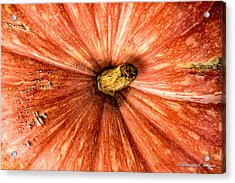 Pumpkin Top Acrylic Print by Christopher Holmes