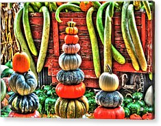 Pumpkins And Gourds Acrylic Print by Linda Segerson