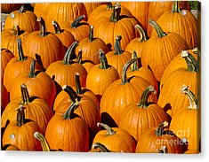Pumpkins Acrylic Print by Anthony Sacco