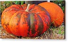 Acrylic Print featuring the photograph Pumpkins by Cynthia Guinn
