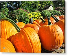 Pumpkins For Sale Acrylic Print