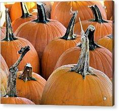 Pumpkins Acrylic Print by Janice Drew