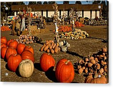 Acrylic Print featuring the photograph Pumpkins by Michael Gordon