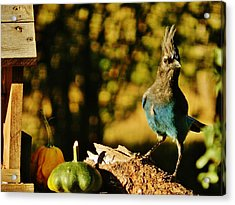 Punked-out Jay Acrylic Print by VLee Watson