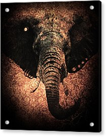 Punkphant Acrylic Print by Elena Mussi