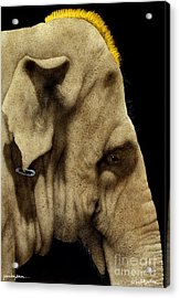 Punkyderm... Acrylic Print by Will Bullas