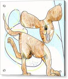 Pup Acrylic Print by Gabrielle Schertz